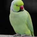 bird-greem-15x21
