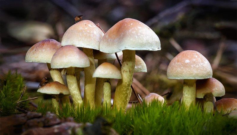 Afbeeldingsresultaat voor paddenstoelen