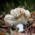 paddenstoelen-hamert-1