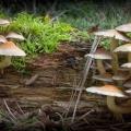 paddenstoelen-hamert-10