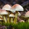 paddenstoelen-hamert-2