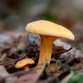 paddenstoelen-hamert-3