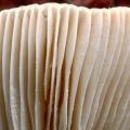 paddenstoelen-hamert-5