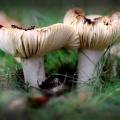 paddenstoelen-hamert-8