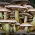 paddenstoelen-hamert-9